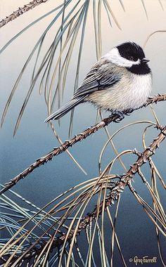 """Pine Needles - Carolina Chickadee"" by Greg Farrell"