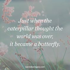 Just when the caterpillar thought the world was over, it became a butterfly. surrogacy. surrogate. surrogacy in canada. infertility. egg donation. egg donor. Canadian Fertility Consulting