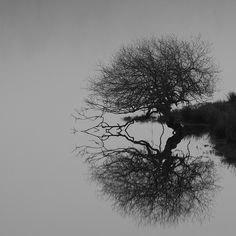 The Trossachs, Scotland by dhansak79,