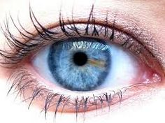 Resultado de imagen para iridologia frases Beautiful Eyes, Most Beautiful, Rare Eyes, Corpus, Iris, Eyes, Frases, Natural Medicine, Universe