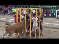 Funny videos 2017 : Stupid people doing stupid things - Bull Fighting - Bull Fails accident - YouTube