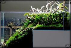 tank aquarium scape