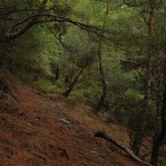 Orman Ne Güzel