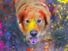 Love this picture! Dog photography with a golden retriever! Tier Wallpaper, Animal Wallpaper, Wallpaper Desktop, Windows Wallpaper, Desktop Backgrounds, Colorful Wallpaper, Nature Wallpaper, Pattern Wallpaper, Iphone Wallpapers