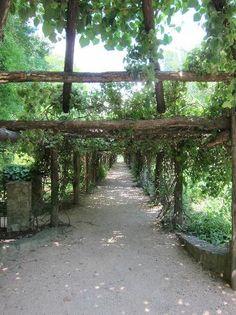 Trip Advisor: Coker Arboretum in Chapel HIll, NC