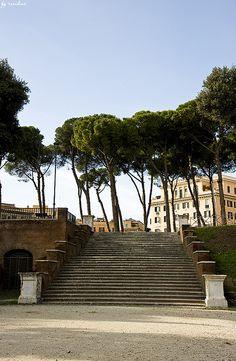 Rome, Italy, with its beautiful umbrella pine trees.