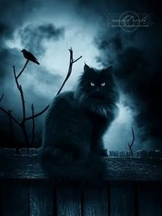 Grimalkin - Cait Sith from The Iron Fey series. The look on this cats face is the exact look i imagine on Grims