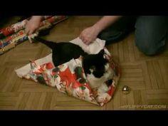 So verpackst du deine Katze in Geschenkpapier. Natürlich nur, wenn sie es zulässt!