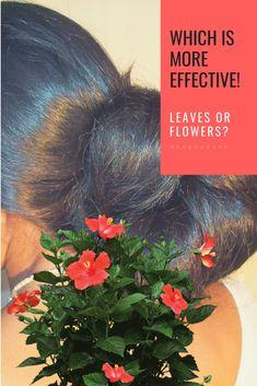 Hibiscus Flowers Or Leaves For Hair Hair Hairstyles Hairloss Haircolor Hairloss Hairgrowth Longhair Lo Healthy Shiny Hair Help Hair Loss Hair Treatment