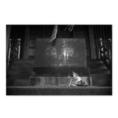 https://flic.kr/p/xYYzVn | Cat September 2015  #cat #smallcats #blackandwhitephotography