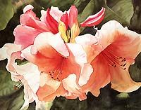 Maud Durland Watercolors, floral paintings