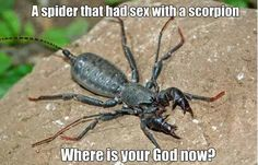 LOL... This is actually a sunspider or whip spider...just another critter we see here in Arizona...found one at work and one at my house...lovely