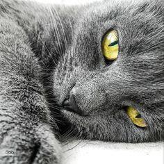 Lazy Kitty by Dávid Detkó on 500px | with Lumia 930 #Lumia #Lumia930 #Kitty #ShotOnMyLumia #500px