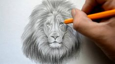 How to Draw a Lion Face: Easy way Step by Step drawing for kids and beginners. How to draw a Lion ( Head, Face, Realistic)? Fairy Drawings, 3d Drawings, Animal Drawings, Pencil Drawings, Pencil Art, Tattoo Drawings, Lion Face Drawing, Drawing Faces, Lions For Kids