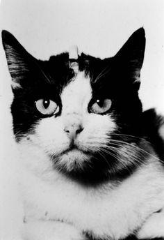 Félicette, premier chat spationaute en 1963