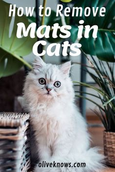 Mats in cats? There are lots of way to avoid these mats or remove them. Mats in cats are not just problem in your feline friends fur, but it can also be very unhealthy for them. Check this guide that can help you remove mats in your cats. Cat Care Tips, Pet Care, Pet Tips, Dog Cat, Matted Cat Fur, Cat Insurance, Cat Info, Cat Mat, Kitty