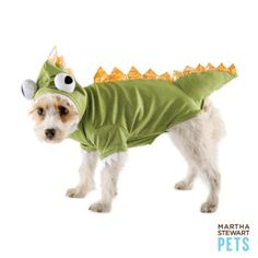 Chili is getting one of these: Martha Stewart Pets™ Green Halloween Dragon Costume @ PetSmart