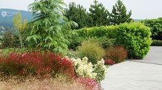 Perennials with evergreens/Évelők örökzöldekkel Evergreen, Perennials, Plants, Plant, Perennial, Planets