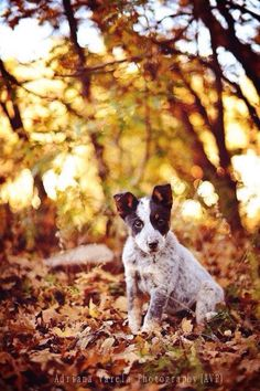 ❤️Dog Love ~ http://www.pinterest.com/joysavor/dog-love/