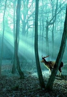 A forest bathed in an eerie turquoise light. #deer