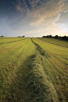 The Journey into High-Quality Hay   Farming Magazine