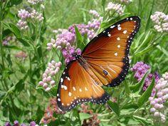 #Butterfly #Flowers #Pretty #Home #Garden