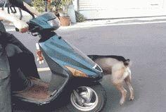 motorcycle cute gif