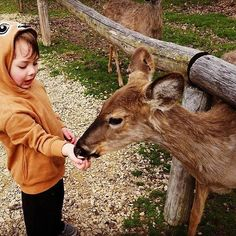 Check out this little dear feeding a little deer!  We love the Wisconsin Deer Park!  by @mama_mego  #lovethedells #wisdells #wisconsindells