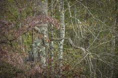 10 Tips for Deer Hunting in the South | Deer Hunting | Realtree Camo