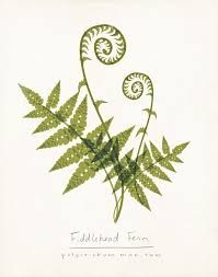 Image result for fern frond tattoo
