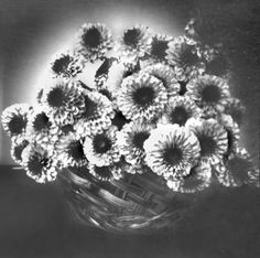 """Pom"" Flower Stll Life by Kristi Hom Gingerbreadcam pinhole camera, paper negative, 16-minute exposure in window light, developed in Caffenol-C   