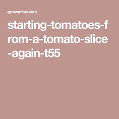starting-tomatoes-from-a-tomato-slice-again-t55