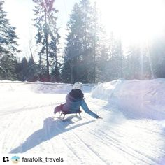 "Snølek og vintermoro. Har du prøvd korketrekkeren? #reiseblogger #reiseliv #reisetips  #Repost @farafolk_travels with @repostapp  Meanwhile in Oslo...  Did you know you can rent an old fashioned sled and ride the ski tracks with it? Hei hvor det går! It's so much fun!  No better way to spend a day in the winter sun!  It's called ""Korketrekkeren"" and is about half an hour ride with the metro from Oslo S. . . #Oslo #korketrekkeren #Visitoslo #visitnorway #Norway #meanwhileinnorway #fun #winter…"