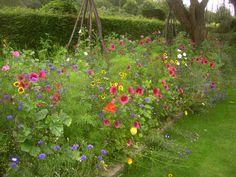 fleurs dans le potager du prieur cl tures et portails fleuris pinterest jardins. Black Bedroom Furniture Sets. Home Design Ideas