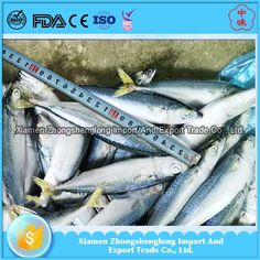 China Frozen whole big eye scad fish for Canning.