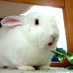 This is a wonderful site for anyone thinking of actually getting a bunny for a pet. Study first...get bunny second...I learned a lot reading it and I've had my buns 7 years.