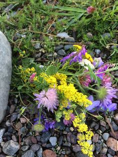 Mykhet og stillhet, kvinneretreat på Vestfoldkysten Plants, Plant, Planets