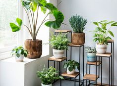 47 Plant Stand Design Ideas for Indoor House plants - Dekoration Ideen Indoor Garden, Indoor Plants, Home And Garden, Indoor Plant Stands, Plantas Indoor, Decoration Plante, House Plants Decor, Bedroom With Plants, Interior Plants