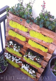 "Wall Garden from a Pallet If you decide to try this project yourself, be sure to find a pallet that's stamped HT for ""heat-treated."" You shouldn't grow your edibles on a pallet or any wood that's been treated with pesticides. Pallets Garden, Wood Pallets, Pallet Gardening, Recycled Pallets, Unique Gardens, Beautiful Gardens, Container Gardening, Gardening Tips, Organic Gardening"