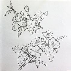 яблоневый цвет рисунок - Поиск в Google