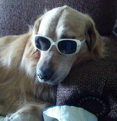 He's sooooo cool!  LOL