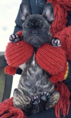 """Do I LOOK like I'm even REMOTELY enjoying this!"", French Bulldog Puppy in the Snow❤"