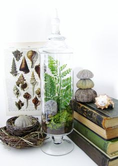 Apothecary Jar Terrarium.  I want to make several for each of my two windows.