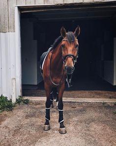 Cute Horses, Pretty Horses, Horse Love, Beautiful Horses, Animals Beautiful, Bay Horse, Types Of Horses, Mundo Animal, Horse Girl