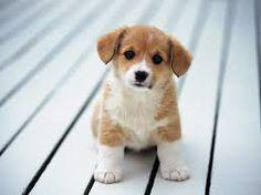 Cute little puppy.