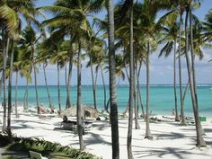 Punta Cana~ the palms are so tall there!