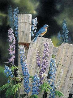 delphiniums and bluebird
