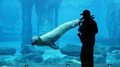 Swimming the blues: Casey the leopard seal is serenaded by saxophone-playing elephant keeper at Australian zoo | Mail Online