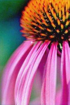 visite par couleurs / rouge   Maïa Thibault macro photographie