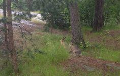 chasing rabbits 4